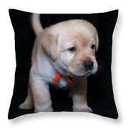 4 Week Old Lab Puppy Throw Pillow