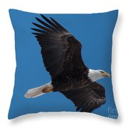 Bald Eagle In Flight 6 Throw Pillow