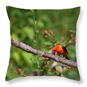 Berry Eating  Scarlet Tanager Throw Pillow
