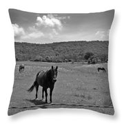 Black And White Pasture With Three Horses Throw Pillow