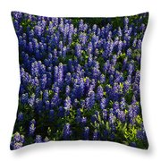 Bluebonnets In The Limelight Throw Pillow