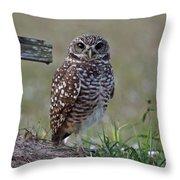 Burrowing Owls - Watching You 3 Throw Pillow