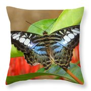 Butterfly Beauty And Grace Throw Pillow