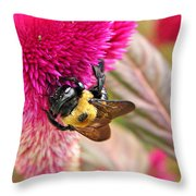 Cockscomb And Bumble Bee Throw Pillow