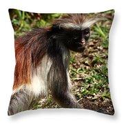 Colobus Monkey Throw Pillow