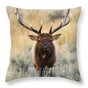 Coming Head On Throw Pillow
