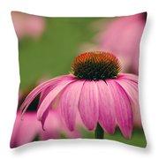 Echinacea Purpurea  Throw Pillow