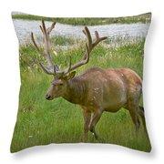 Elk At Pond Edge Throw Pillow