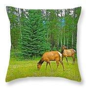 Elk Near Wapiti Campground In Jasper Np-alberta Throw Pillow