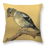 Female Chaffinch Throw Pillow