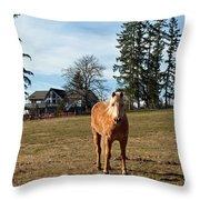 Horse Unbrideled Throw Pillow