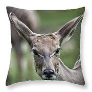I Am All Ears Throw Pillow
