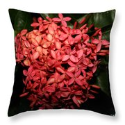Ixora Night  Throw Pillow