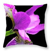 Japanese Iris Violet Black  Throw Pillow