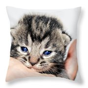 Kitten In A Hand Throw Pillow by Susan Leggett