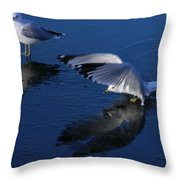 Landing On Icy Water Throw Pillow