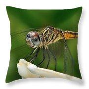 Austrogomphus Dragonfly Throw Pillow