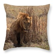 Lions Of The Ngorongoro Crater Throw Pillow