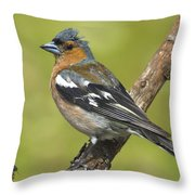 Male Chaffinch Throw Pillow