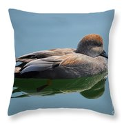 Male Gadwall Duck  Throw Pillow
