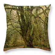 Moss-covered Big Leaf Maple Tree Throw Pillow