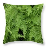 Mountain Ferns Of North Carolina Throw Pillow