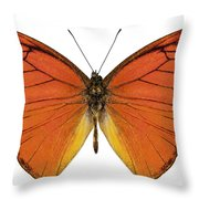 Orange Butterfly Species Appias Nero Neronis  Throw Pillow