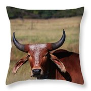 Red Brahma Bull In A Pasture Throw Pillow by Robert D  Brozek