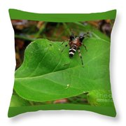 Sergiolus Capulatus  Throw Pillow