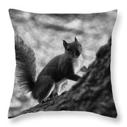Squirrel In The Park V4 Throw Pillow
