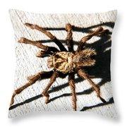 Tarantula Throw Pillow