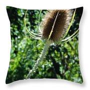 Thistle Plant Throw Pillow