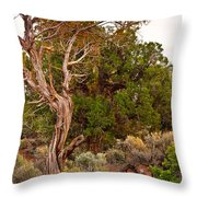 Weathered Tree Sunrise Canyon Dechelly Throw Pillow