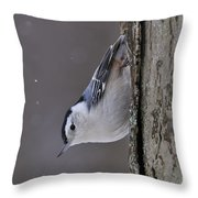 White-breasted Nuthatch Pictures 27 Throw Pillow