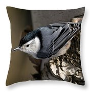 White-breasted Nuthatch Pictures 35 Throw Pillow