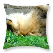 001 Lazy Boy At The Buffalo Zoo Throw Pillow