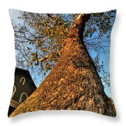 001 Oldest Tree Believed To Be Here In The Q.c. Series Throw Pillow