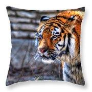 0010 Siberian Tiger Throw Pillow