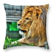 002 Lazy Boy At The Buffalo Zoo Throw Pillow