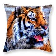 002 Siberian Tiger Throw Pillow