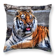 003 Siberian Tiger Throw Pillow