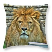 006 Lazy Boy At The Buffalo Zoo Throw Pillow