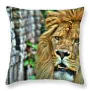 008 Lazy Boy At The Buffalo Zoo Throw Pillow