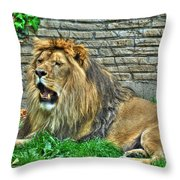 009 Lazy Boy At The Buffalo Zoo Throw Pillow