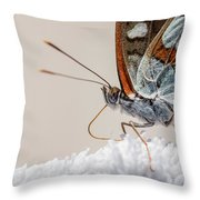 01 Southern White Admiral Butterfly Close Up Throw Pillow