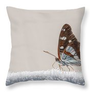 01 Southern White Admiral Butterfly Throw Pillow