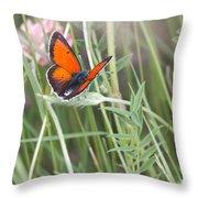 02 Balkan Copper Butterfly Throw Pillow