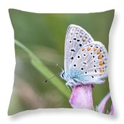02 Common Blue Butterfly Throw Pillow