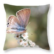 02 Long-tailed Blue Butterfly Throw Pillow