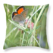 03 Balkan Copper Butterfly Throw Pillow